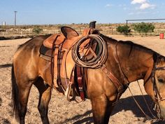My Ride, Cows, First Time, The One, Gloves, Horses, Day, Fitness, Animals
