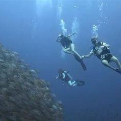 I need to go diving again ASAP! #missthis #phoenixdivers #gulfofthailand #MyLBW #lifebeforework #thailand #thaiventure #travel #schooloffish #diving #kohtao