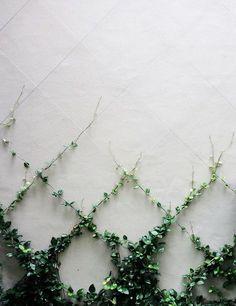 Ivy climbers