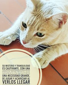La Chica del Yoyo Rojo: Cats, Blog, Red, Animals, Girls, Gatos, Kitty, Cat, Cat Breeds