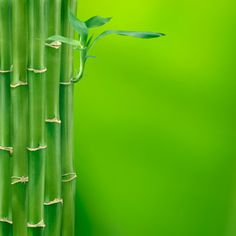 green?  absolutely, bamboo grows so quickly and can continue to grow up to an inch and a half after it is harvested