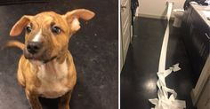 People Are Applauding This Dog For Trying To Clean Up His Own Pee With Toilet Paper - BuzzFeed News