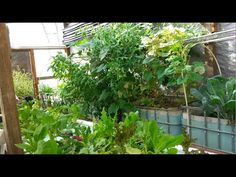 Aquaponics Greenhouse System Build In the Smoky Mountains - YouTube