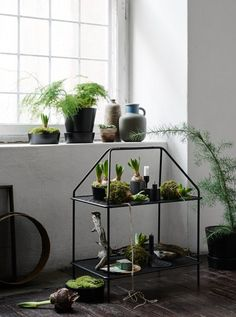 Green inspiration for the new year - via Coco Lapine Design blog