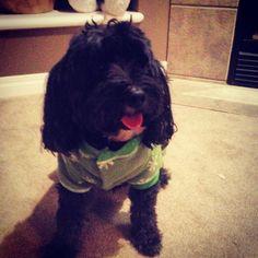 Dog in a onsie