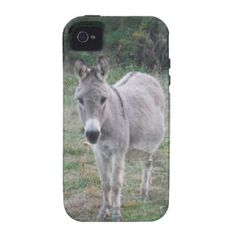 Donkey in a Field. Vibe iPhone 4 Covers