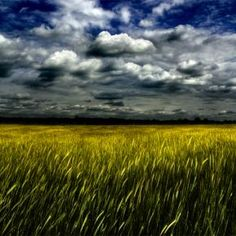 Storm clouds over the late spring wheat Color Photography, Nature Photography, Tango, Wisconsin, Michigan, Flint Hills, Great Plains, How To Grow Taller, Storm Clouds