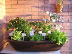Horta Zen - Horta Zen com plantas já desenvolvidas