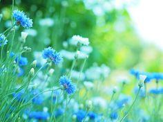 春の息吹 by clicliclie