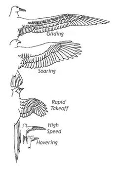 Wing shapes. Construction reducing the drag.