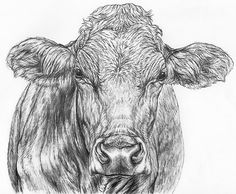 Sketch of of cows at are 4 of cows how presented helga drawings a sketch red camera alternatives, own method cow 2011. Description from creciendocontunegocio.celeris.cl. I searched for this on bing.com/images