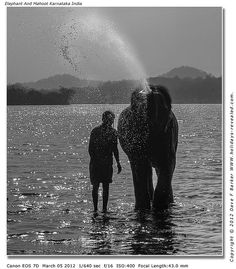 Elephant And Mahoot Karnataka India,