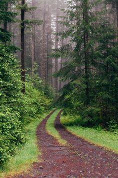 Willamette National Forest, Oregon by James Unkov Photography Beautiful World, Beautiful Places, Landscape Photography, Nature Photography, Forest Path, Forest Road, Conifer Forest, Walk In The Woods, To Infinity And Beyond