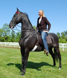 Mountainviews Mystic Memories American Saddlebred my first love and once in a lifetime horse. Cute Horses, Horses For Sale, Pretty Horses, Horse Love, Beautiful Horses, Animals Beautiful, Tennessee Walking Horse, American Saddlebred, Rare Horse Breeds