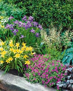 Photo Collection «Massif fleuri» - 12 plantesvivaces