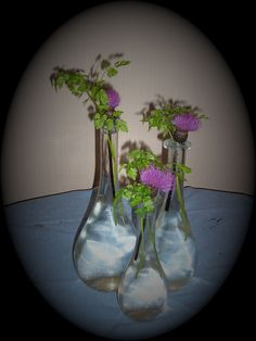 jeg elsker å dandere blomster...her er krydderurten koriander og tistler.