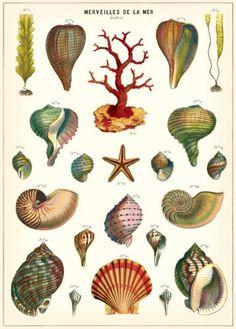 Cavallini & Co. Merveilles De La Mer Decorative Decoupage Poster Wrapping Paper Sheet Cavallini & Co. http://www.amazon.com/dp/1619922150/ref=cm_sw_r_pi_dp_B6DQvb01M5GF9
