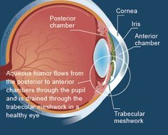 Glaucoma Treatment research with pulsating electromagnetic fields: What is Glaucoma? Glaucoma is an eye disease in which the optic nerve is damaged in a characteristic pattern. This can permanently...