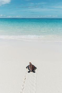 Baby sea turtle taking its first step to the sea in Madagascar🐢🐢🐢 Halloween Desserts, Freshwater Aquarium, Aquarium Fish, Wild Animals Photography, Baby Sea Turtles, Halloween Photography, Singing In The Rain, African Cichlids, Summer Aesthetic