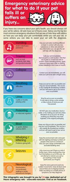 Infográfico: O que fazer em caso de emergência