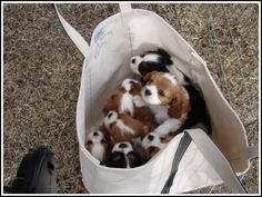 A bag full of puppies... yes please.