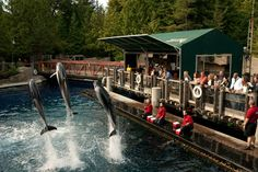 Vancouver Aquarium - Featured on RueBaRue