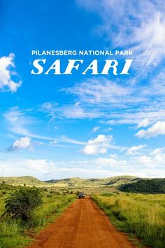 An Amazing Safari Day Trip to Pilanesberg National Park from Johannesburg South Africa // http://localadventurer.com