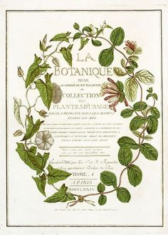 HomeCollection.: Botanical colors