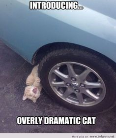 Overly dramatic cat