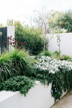Garden Show, Home And Garden, Beaumont House, Lisa Ellis, Landscape Design, Garden Design, Front Fence, Water Wise, The Design Files