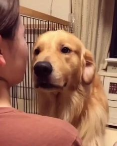Cute Funny Animals, Cute Baby Animals, Funny Dogs, Animals And Pets, Funny Memes, Chien Golden Retriever, Cute Puppies, Dogs And Puppies, Gato Gif
