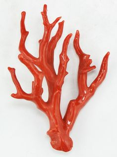 red branch coral - Google Search