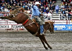 Calgary Stampede, Alberta - Roll on July 6th, I'm there!