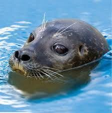 adorable sea lion