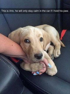 This puppy need comforting to help him deal with the scariness of riding in a car.
