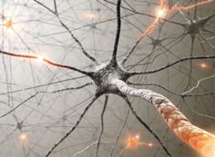 Memories May Not Live in Neurons' Synapses The finding could mean recollections are more enduring than expected and disrupt plans for PTSD treatments Mar 17, 2015 |By Roni Jacobson
