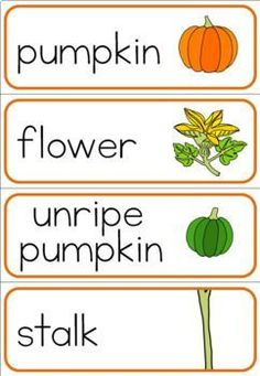 Pumpkin Life Cycle, Pumpkin Flower, Preschool Class, Vocabulary Words, Life Cycles, Science, Writing, Seasons, Ideas