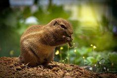 Squirrel, Eating Squirrel, Sweet