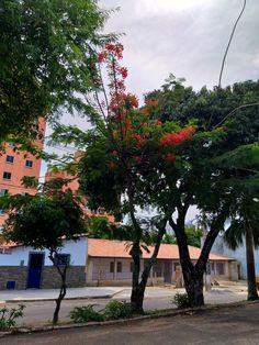 Rua  Marise  Bastier,  Lagoa Nova Delonix Regia, Sidewalk, Plants, Water Pond, Street, Side Walkway, Walkway, Plant, Walkways