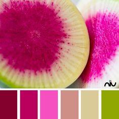 Watermelon Color Palette