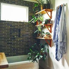 : @aleajoy your daily shower + a good playlist = #5minuteescape. energizing for the morning. calming for the evening. if you haven't already, add some moisture-loving #bathroomplants to improve the overall vibe. . . #plantshelf #plantdecor #wellnesswednesday #takeabreak #foryourhealth