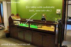 Gallery For > Easy Tortoise Table Tortoise House, Tortoise Habitat, Tortoise Table, Turtle Habitat, Baby Tortoise, Sulcata Tortoise, Tortoise Food, Turtle Enclosure, Tortoise Enclosure