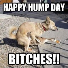 Happy Hump Day Bitches quotes memes quote days of the week wednesday humpday wednesday quotes camels hump day memes Happy Hump Day Meme, Funny Hump Day Memes, Hump Day Humor, Funny Adult Memes, Funny Happy, Funny Dogs, Adult Humor, Funny Quotes, Wednesday Humor