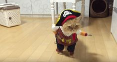 This cat wore this pirate outfit and looked incredibly sassy. | The 27 Most Important Things Cats Did In 2015