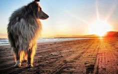 Собака смотрит на закат