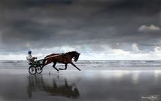horse flying, deauville beach, normandy, photo by Dominique Besni