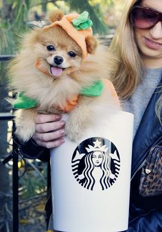 "You don't like Pumpkin Spice Lattes (unless it's a costume on a dog). | 18 Signs You're Not ""Basic"", You're ""Acidic"""