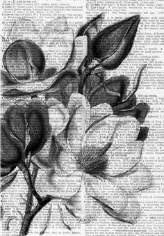 1000+ ideas about Charcoal Art on Pinterest | Pencil drawings ...