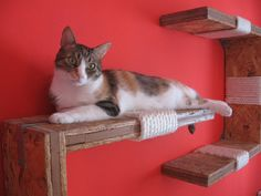 this looks like an easy to do on the cheap cool thing for your cats. we can alter it a bit with some nicely finished wooden shelving material and cool modern hanging brackets.