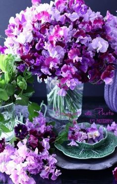 There is nothing more beautiful in Spring than a huge bouquet of Sweet Pea flowers! They have a gorgeous spring like scent and they make one smile.a lot! Sweet Pea Flowers, Fresh Flowers, Purple Flowers, Beautiful Flowers, Sweet Pea Bouquet, Arrangements Ikebana, Floral Arrangements, Bonsai Plante, Pea Ideas